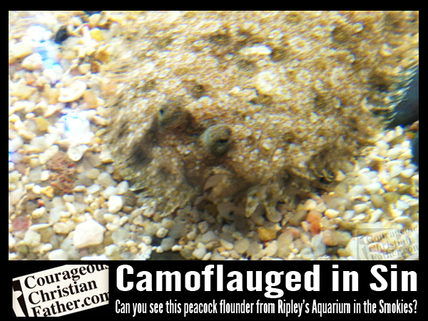 Camouflaged in Sin - Can you see this peacock flounder from Ripley's Aquarium of the Smokies