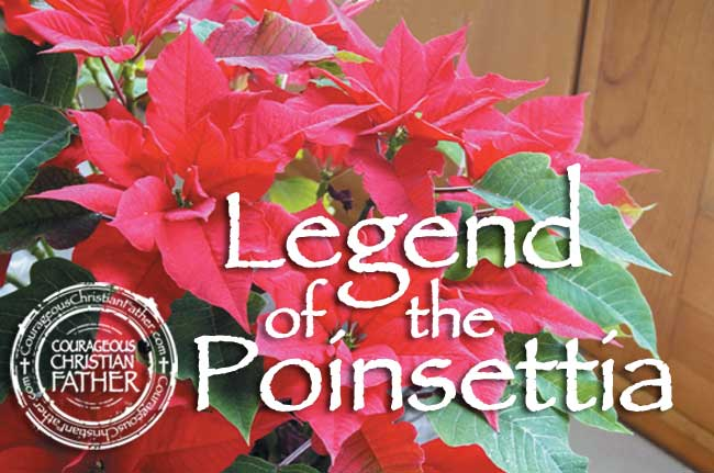 Legend of the Poinsettia