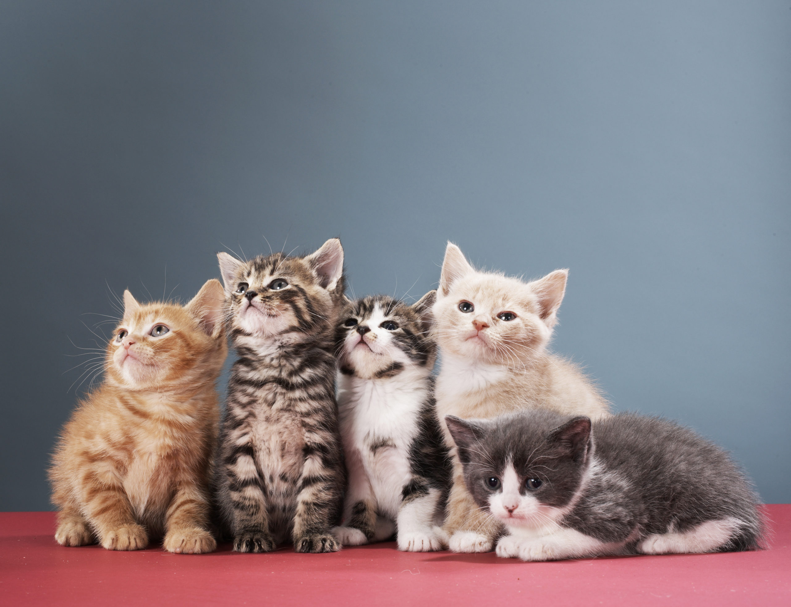 God Created Cats - Multiple Cats - Benefits Owning A Cat