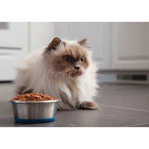 Cats and vegetarian diets may not make an ideal match.