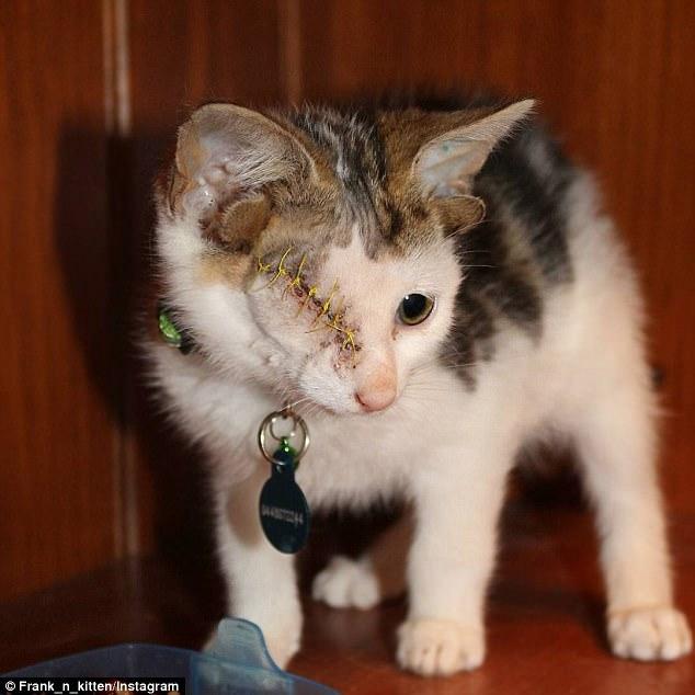 Frankie (Frakenkitten) kitten with four ears and one eye