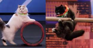 Savitsky Cats Me-Wowed the Judges of America's Got Talent #SavitskyCats