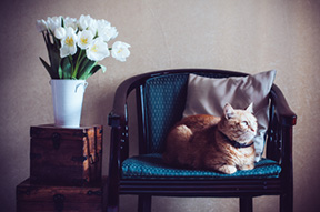 More Space Meow! Learn to Keep Your Cat Happy in a Small Home