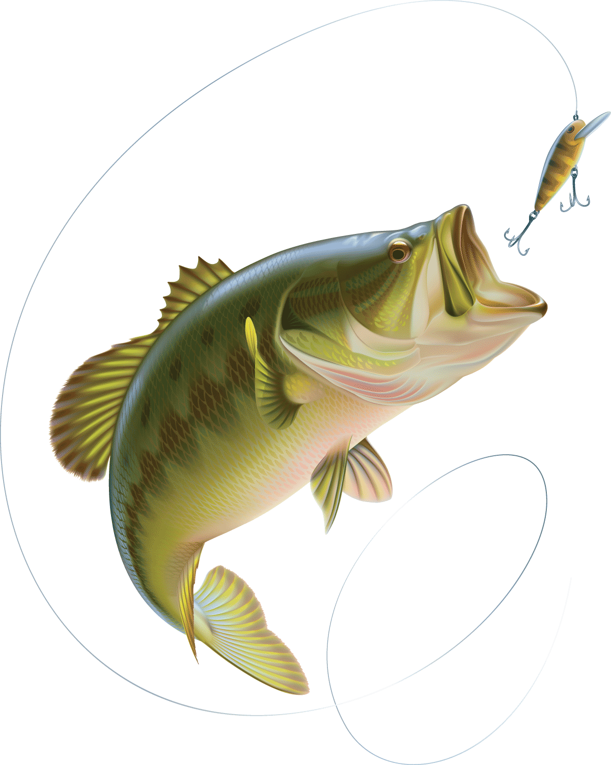 The summer can be slow for bass fishermen. The water is warm and the oxygen that fish need for peak activity is not found in warmer water. Therefore they tend to go deeper or become more active when the days are at their coolest.